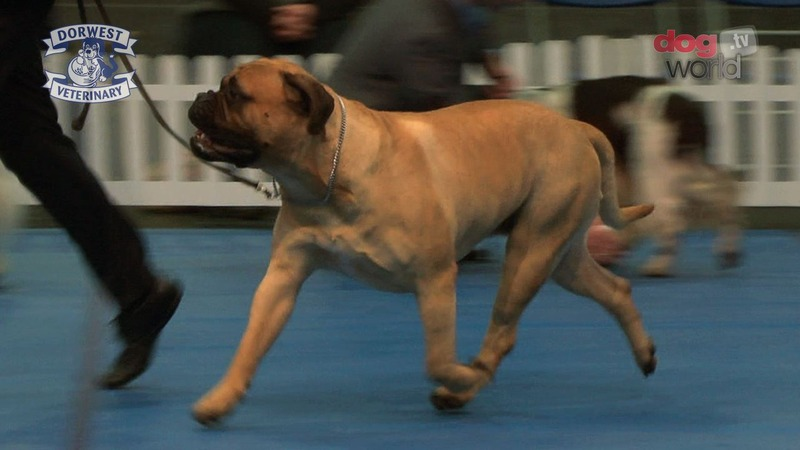 Video: Boston 2014 - Best in show