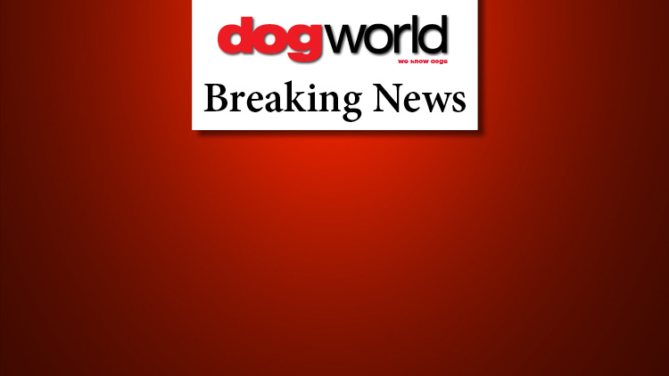 KC suspends unbeaten dog rule and AV stakes classes regulations