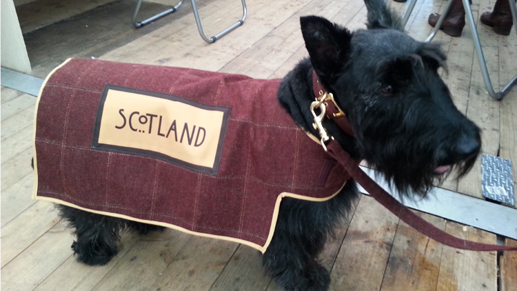 Scottish Terriers steal Commonwealth limelight but Islamic leaders unhappy
