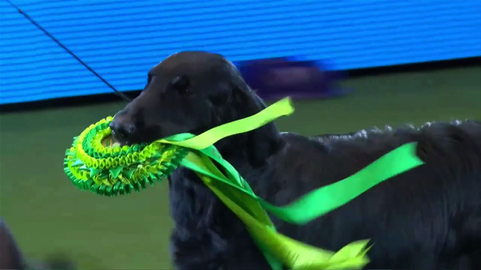 Watch: Around the Dog World - Crufts and Pawscars 2015
