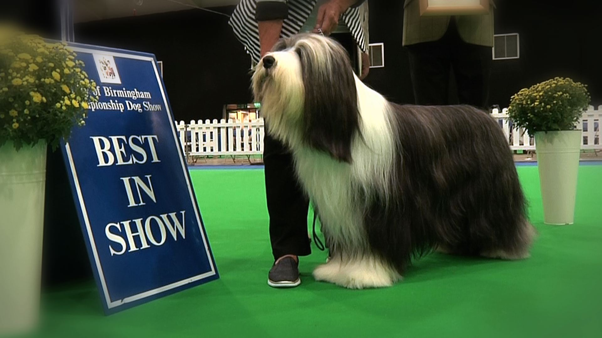 City of Birmingham 2016 - Best in Show
