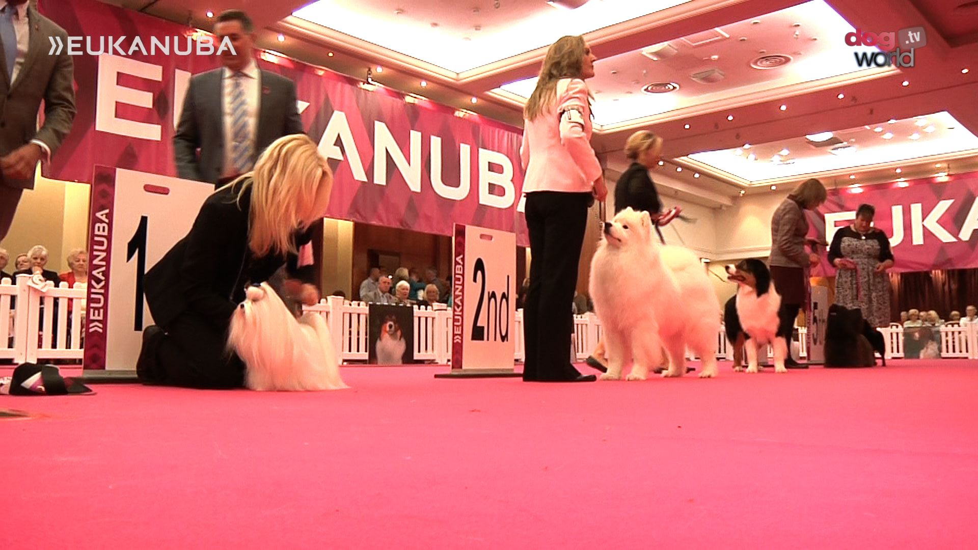Eukanuba Champion Stakes Final 2015