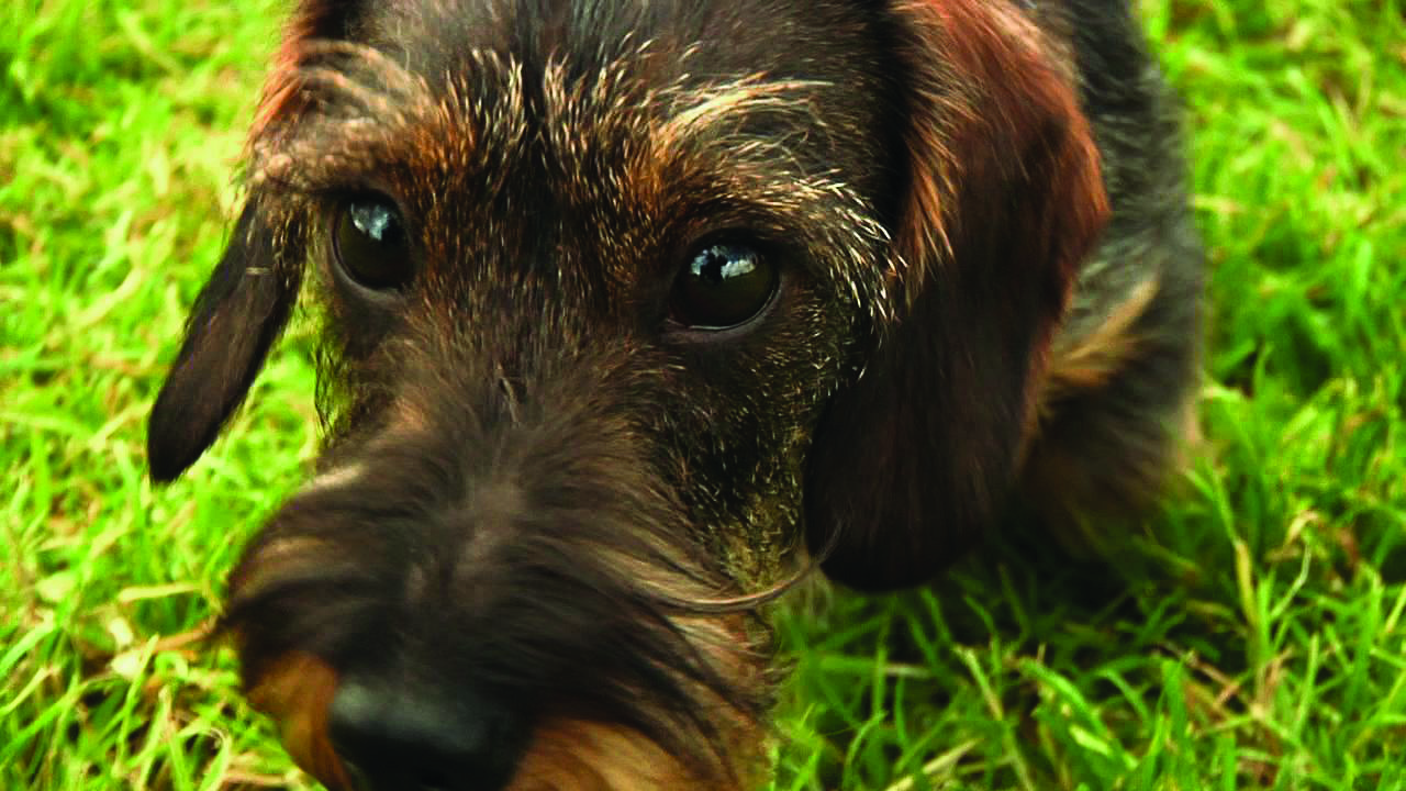 Do you know your dog breeds?
