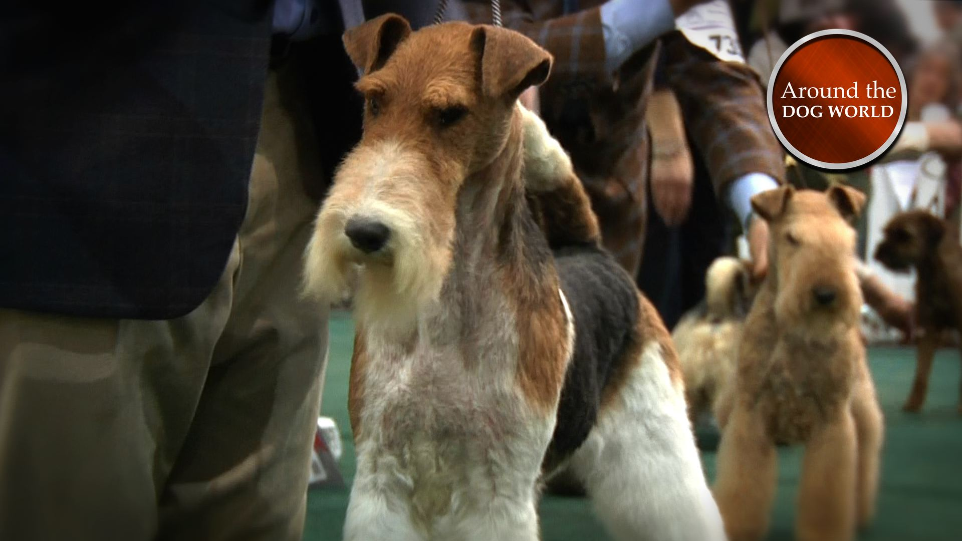 Around the Dog World talks Terriers