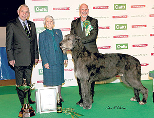 Winner of Crufts hound group dies