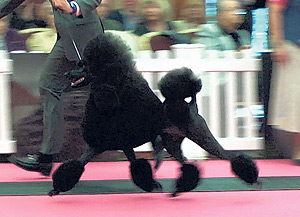 Around the Dog World � Champions and Bloopers