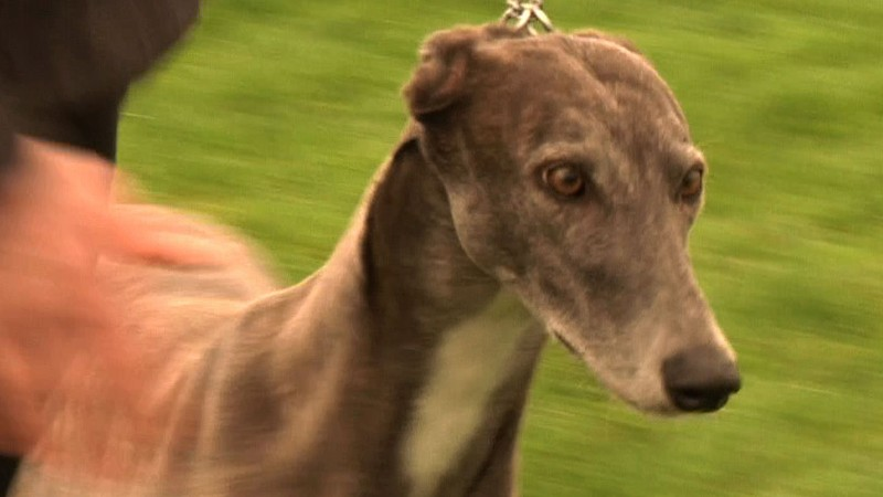 Video - Hound Association of Scotland - Best in Show