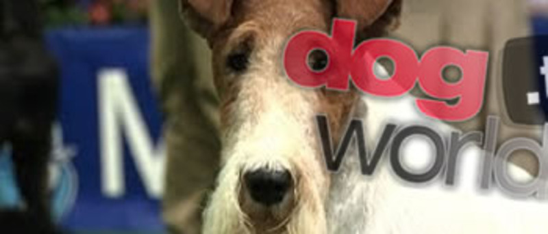 dogworld tv